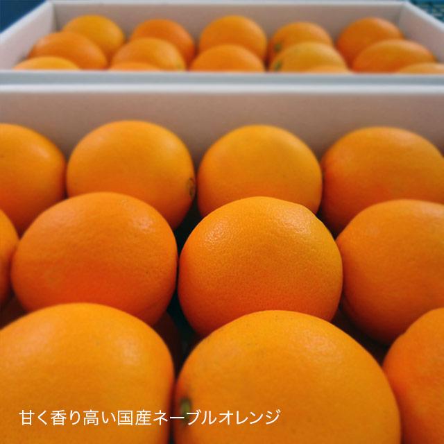 瀬戸内 ネーブルオレンジ スライス オレンジスライス ジャム